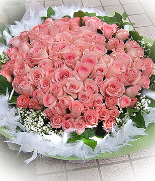 Twr783 101 Diana Pink Roses